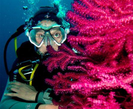 Plongée sous-marine sur la Presqu'île de Giens
